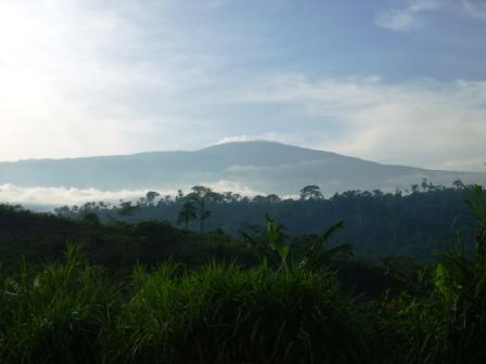 Der Mount Cameroon
