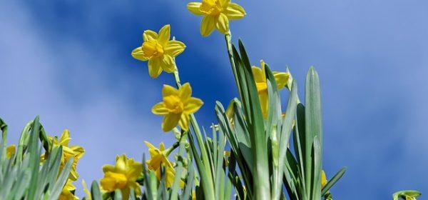 28.3.: Start des Projektchores für Ostern